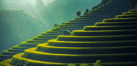 Where is bali located the rice terraces